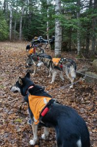 Dog sled training, taking a break