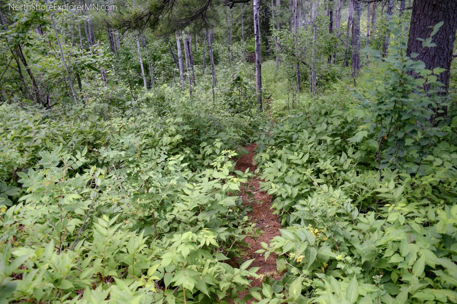 Hiking trail to Chrystal Cliffs, Tettegouche State Park