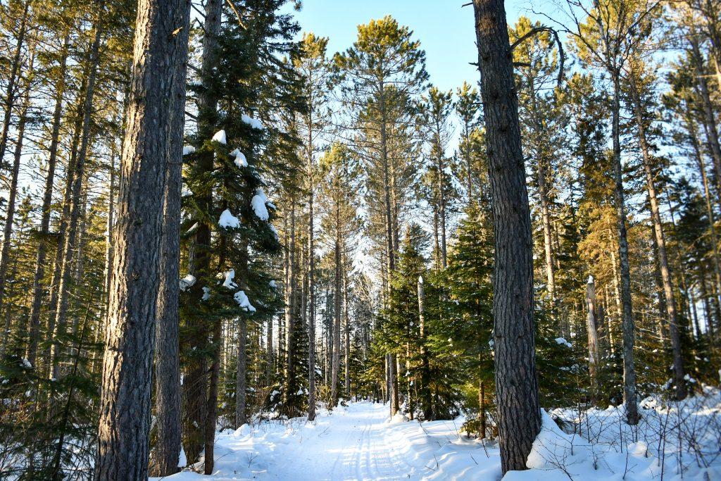 Cross country skiing at George Washington Pines