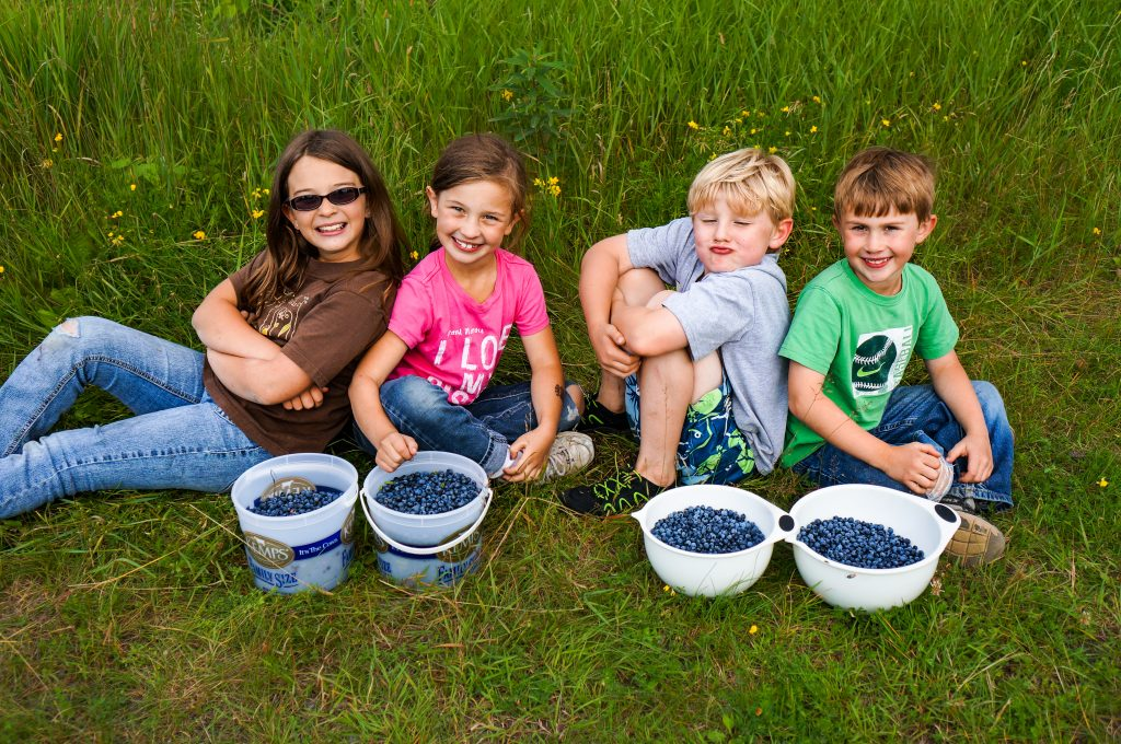 Blueberry picking on the Gunflint Trail, North Shore MN